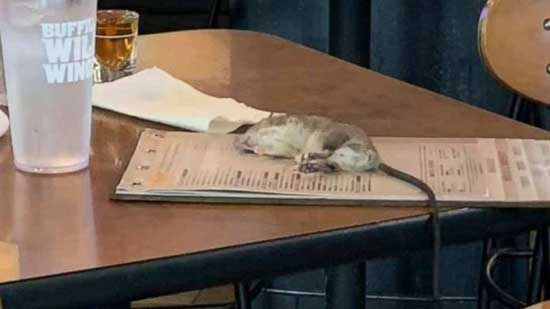 Rat falls from ceiling onto customer's table at Buffalo Wild Wings